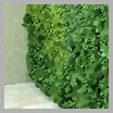 Living / green walls
